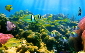 colorful_coral_reef_fish-1552664